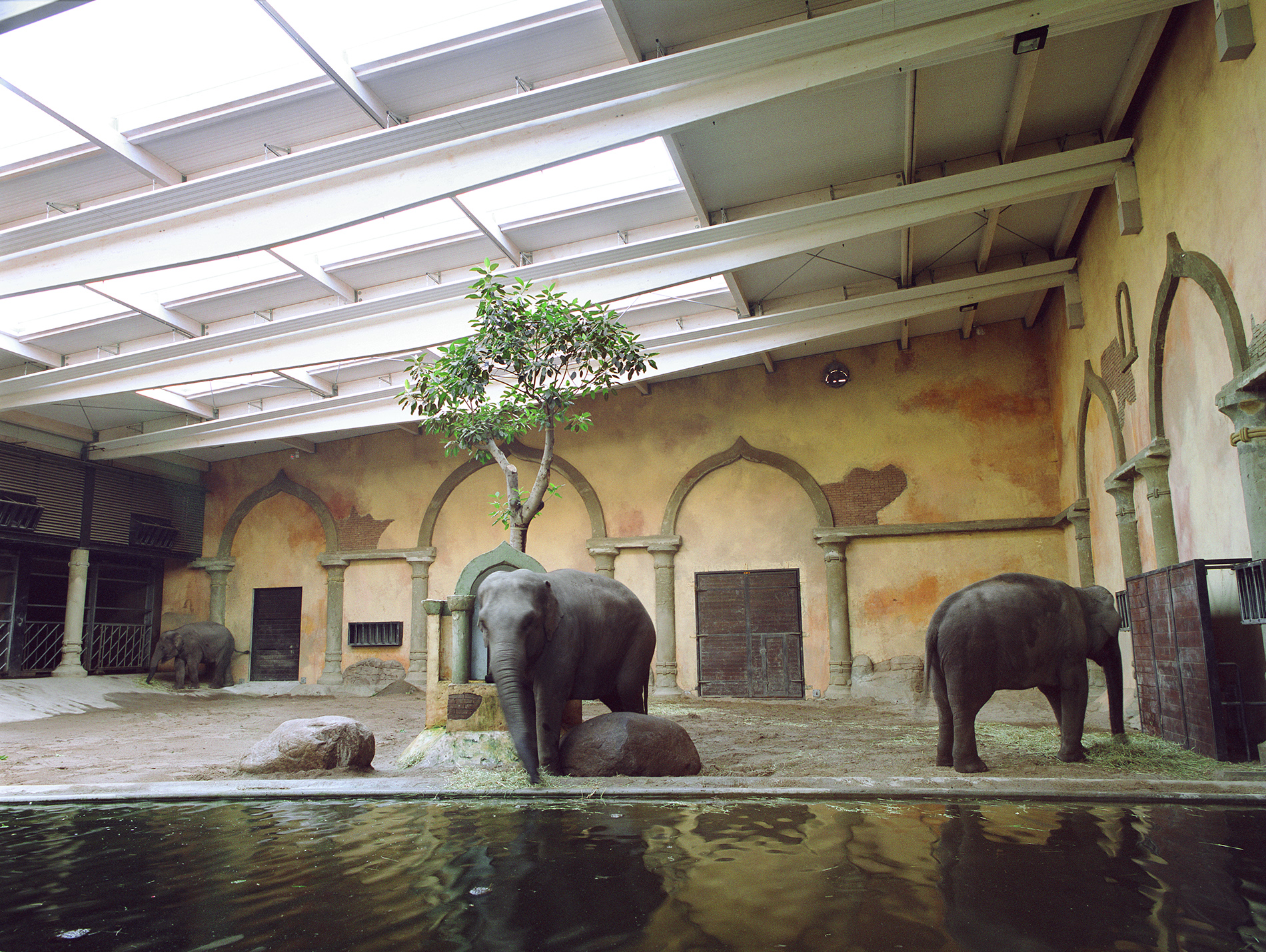 Elephants at Hamburg Zoo