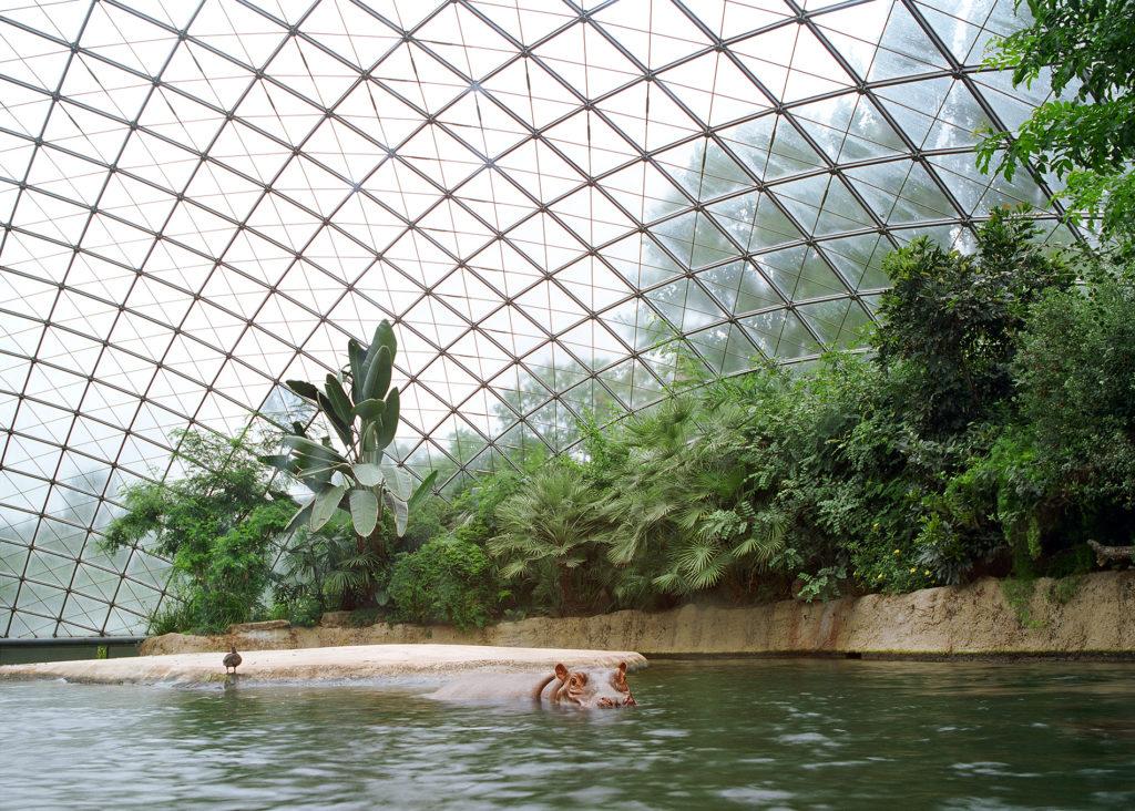 Hippopotamus at Berlin Zoo