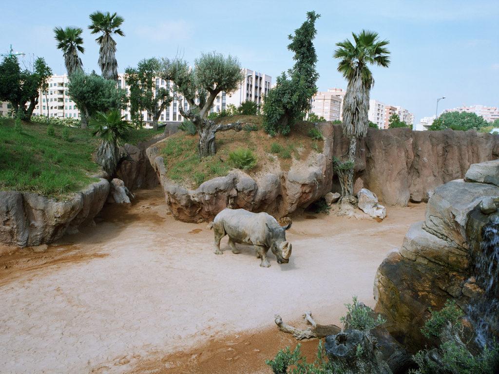Rhino at Valencia Zoo