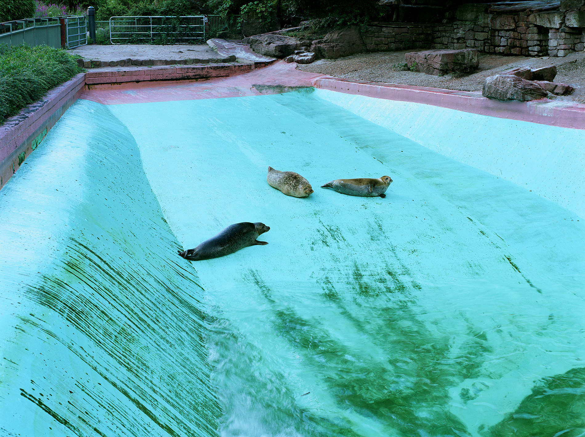 Seals at Karlsruhe Zoo